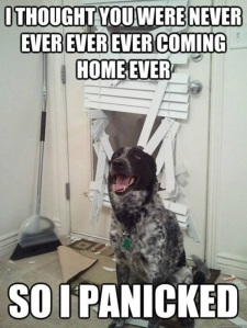 Random but funny!